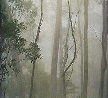 Tall trees in the Wilderness by Clare Colins