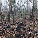 Bushfire Recovery by Geoff Smith