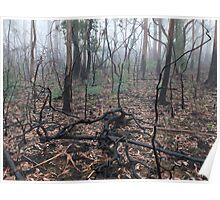 Bushfire Recovery Poster