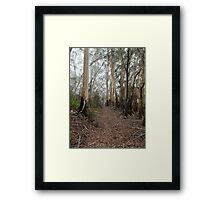 Mountain Ash Trees 1 Framed Print