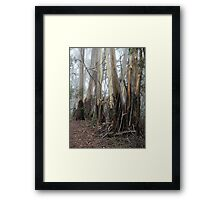Mountain Ash Trees 2 Framed Print