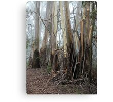 Mountain Ash Trees 2 Canvas Print