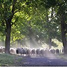 Moving a mob of sheep  by Barbara Caffell