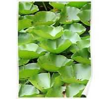 layers of lotus leaves Poster