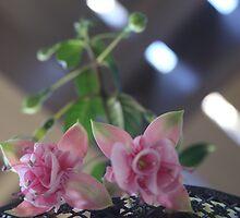 Fuschia-White & Pink by Arod28