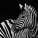 Zebra No. 3 by Sheryl Unwin