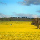 Australian Canola Landscape by jwwallace