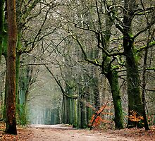 Looking for the last leaves in the January forest by jchanders