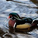 Colorful Forest Jewel - a Wood Duck in a Secluded Lake by Georgia Mizuleva