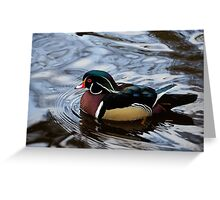 Colorful Forest Jewel - a Wood Duck in a Secluded Lake Greeting Card