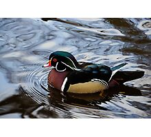 Colorful Forest Jewel - a Wood Duck in a Secluded Lake Photographic Print