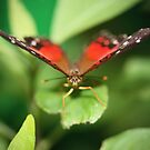 Butterfly Farm by Greg Little