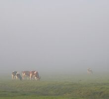 Cows in the Fog by Jo Nijenhuis