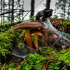 Just Try To Stop Me ~ Wild Mushrooms ~ by Charles & Patricia   Harkins ~ Picture Oregon