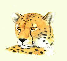 Portrait of a Cheetah by HandsonHart