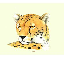 Portrait of a Cheetah Photographic Print