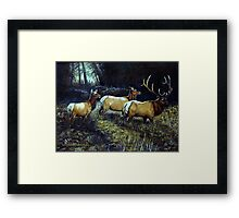 """Forest Royalty"" Framed Print"