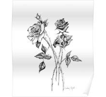 Graphite Roses Poster