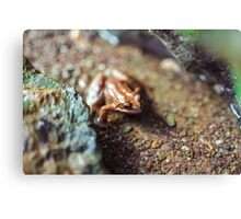 Macro of a brown frog in the water Canvas Print