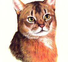 Abyssinian Cat by HandsonHart