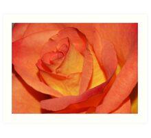 Macro Rose Art Print
