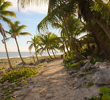 Leaning Palms by Made By Maryann Photography
