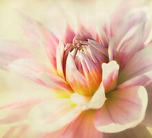 dahlia by lucyliu