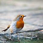 Little Robin by Ric Hampton