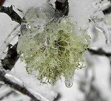 Frozen Lichen by Martha Medford