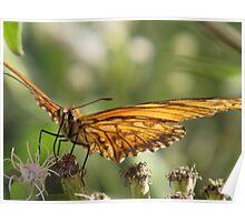 butterfly III - mariposa Poster