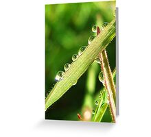 Dewdrops in the Morning Greeting Card