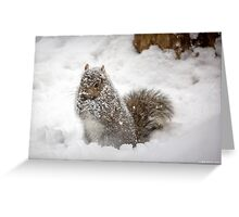 Abominable Squirrel Greeting Card