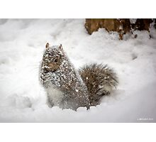Abominable Squirrel Photographic Print