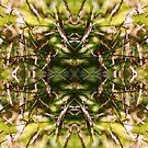 plantVortex by headygirl
