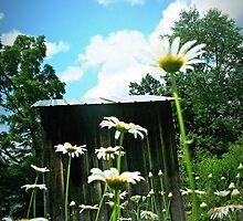 Daisy Day  by artbybutterfly