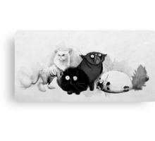 Persian cats Canvas Print