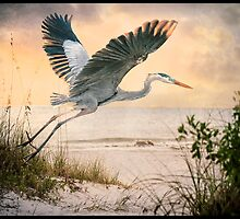 Take Off by Tarrby