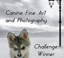 Challenge Winner Banner Canine Fine Art and Photography by Vicki Childs