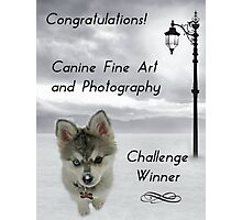 Challenge Winner Banner Canine Fine Art and Photography Photographic Print