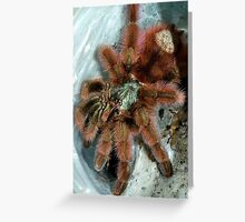 Adult Avicularia versicolor Greeting Card