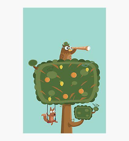 The Owl Tree Photographic Print