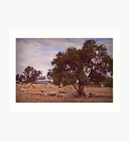Sheep Station out West Art Print