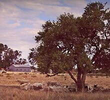 Sheep Station out West by myraj