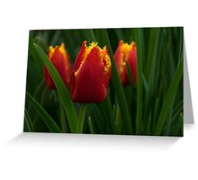 Cheerfully Wet Red and Yellow Tulips Greeting Card