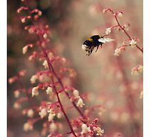 Busy Buzzy Bottom Photographic Print