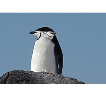 "Chinstrap Penguins ~ ""Cliff Top Power Nap"" Photographic Print"