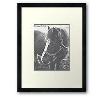 95/365 Framed Print