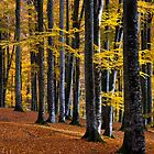 Autumn trees, Romania by Ty Cooper