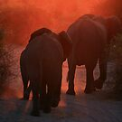 elephants on sunset by Ty Cooper