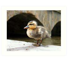 Little Quack ! Art Print